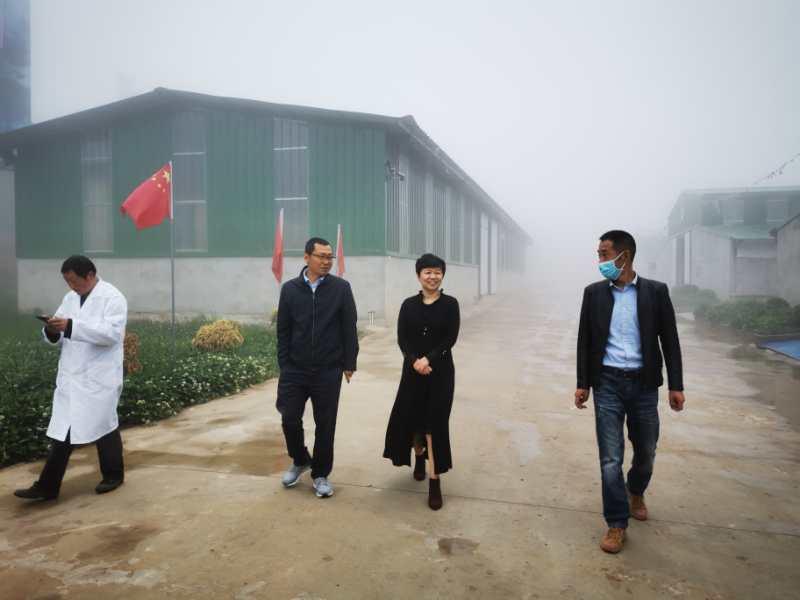区人民检察院检察长李红调研黑山羊农旅融合项目